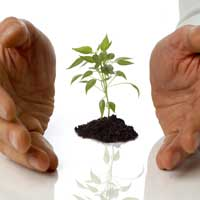 Social enterprise, growing plant, growing a business