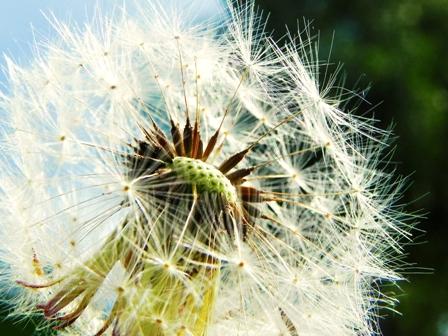 Seed investment scheme